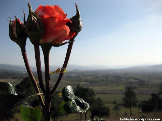 rose Chignahuapan