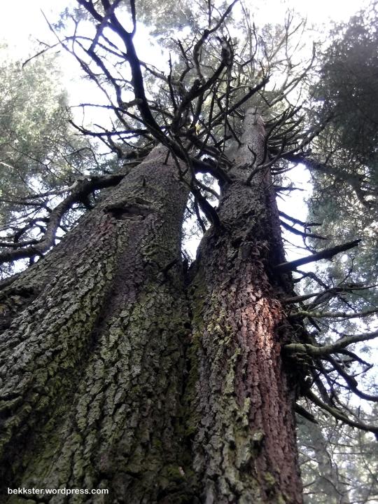 Strange trees.