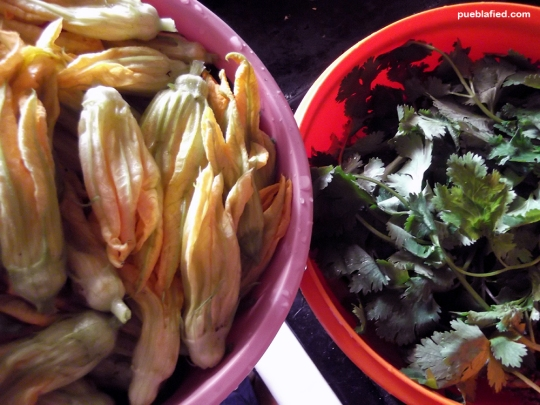 Salads with cilantro (coriander) and flor de calabaza (squash flower).
