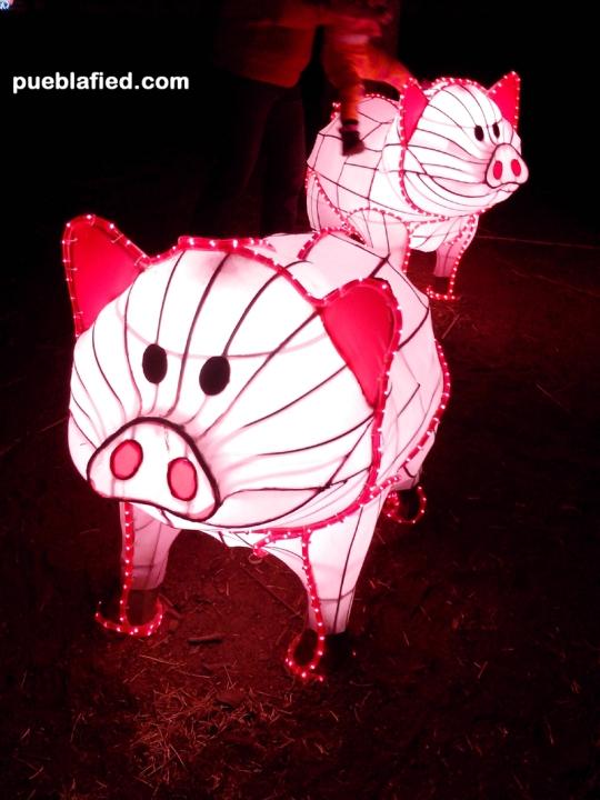 Piglets in Atlixco.
